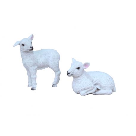 Kuju Lammas